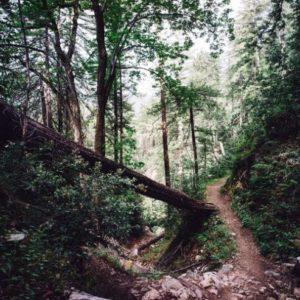 Trail-8km-740x493